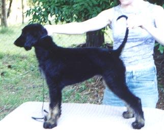 Piper 11 weeks